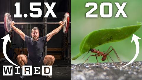 Why Humans Can't Lift as Much as Ants (And How We Could) | WIRED