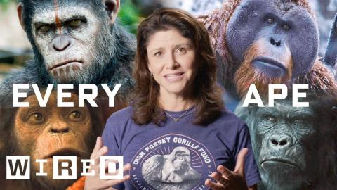 Every Ape in Planet of the Apes Explained | WIRED