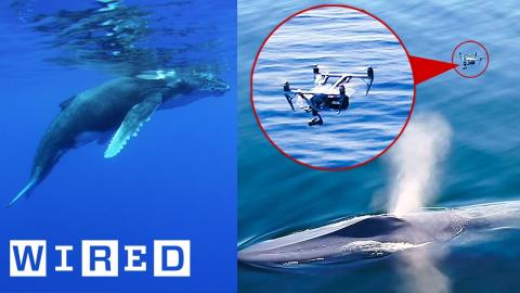 Biologist Explains How Drones Catching Whale Snot Helps Research | WIRED