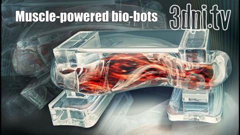 3DPI.TV - 3D Printed Bio Bots Use Mouse Muscle to Move