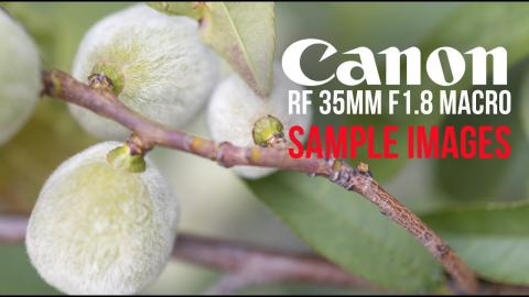 This Canon 35mm 1.8 macro lens can't be underestimated