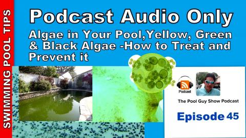 How to Treat Yellow, Green and Black Algae and How to Prevent it in Your Pool