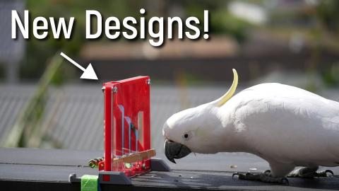Cute Cockatoo Solves Parrot Puzzles (All new designs!)