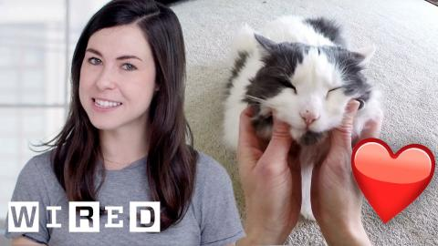 Researcher Explains Why Cats May Like Their Owners as Much as Dogs | WIRED